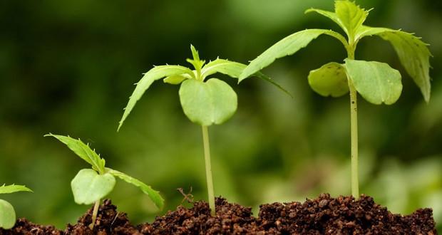 Выбираем удобрение для садовых и комнатных растений.