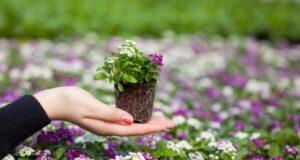 5 советов при выращивании рассады цветов: без них можно остаться без ярко цветущих грядок
