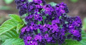 5 цветов, которые пора сеять на рассаду в феврале, чтобы они вас радовали летом